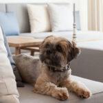 Hunde Erlaubt Im Wyn Strandhotel Sylt
