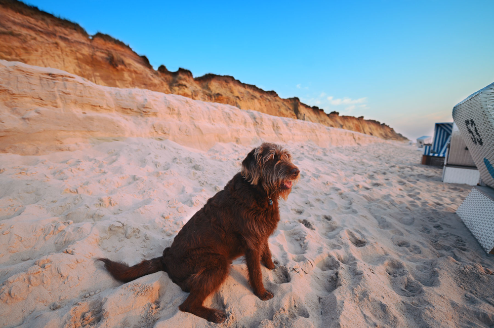 Hund am Strand beim Sylt Urlaub im Wyn Strandhotel